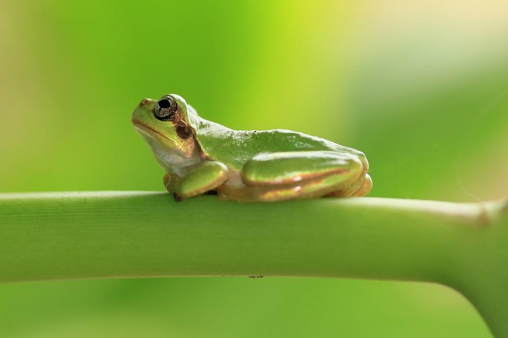 小さなカエル