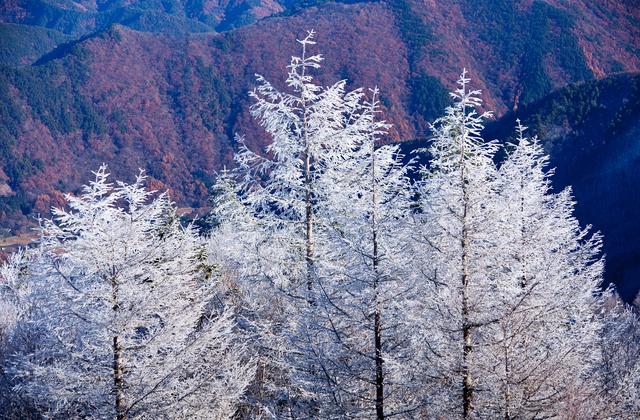 高原の初雪