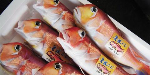 提供:JF全漁連・JF福井「プライドフィッシュ」